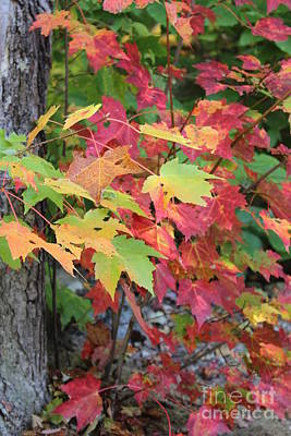Photograph - Fall Is Here by Jeffrey Akerson