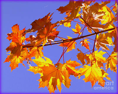 Photograph - Fall Is In The Air by Lisa Conner