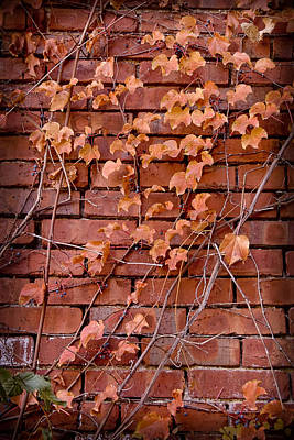 Photograph - Fall Ivy On Old Bricks by Michael Flood
