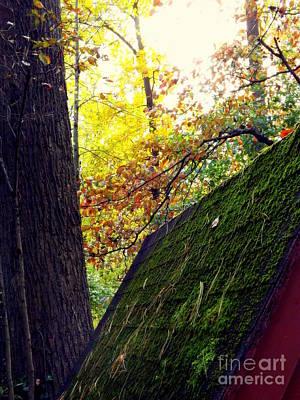 Photograph - Fall by John Potts