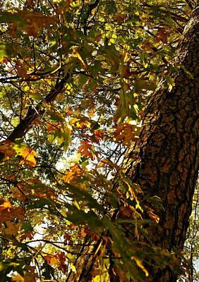 Photograph - Fall Kaleidoscope by Michele Myers