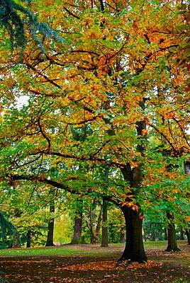 Fall Kissing The Leaves  Art Print by Rae Berge