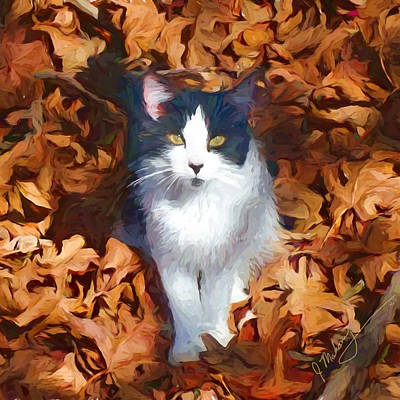 Photograph - Fall Kitty by Jeanette Mahoney