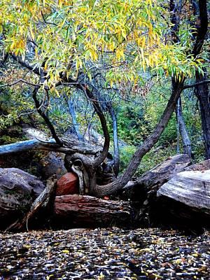 Photograph - Fall by Kruti Shah