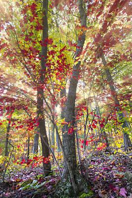 Fall Laser Beams Art Print by Debra and Dave Vanderlaan