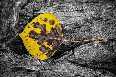 Photograph - Fall Leaf by Adam Perez