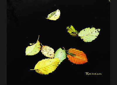 Photograph - Fall Leaf Art Collection by Sadie Reneau
