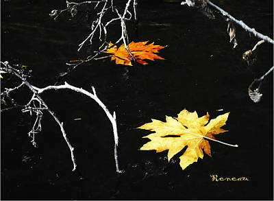 Photograph - Fall Leaf Art by Sadie Reneau