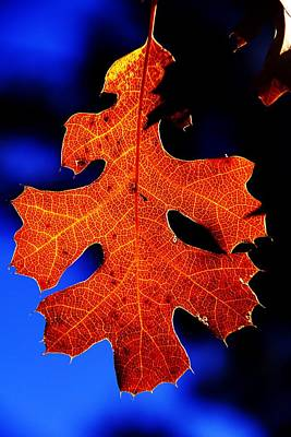Photograph - Fall Leaf Closeup by Michael Courtney
