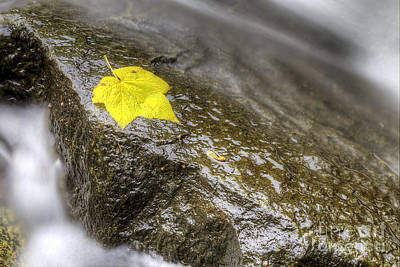 Falls Photograph - Fall Leaf Hanging On by Twenty Two North Photography