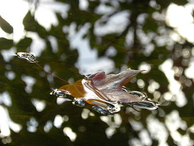 Fall Leaf In Stream Print by Sheri Lauren Schmidt