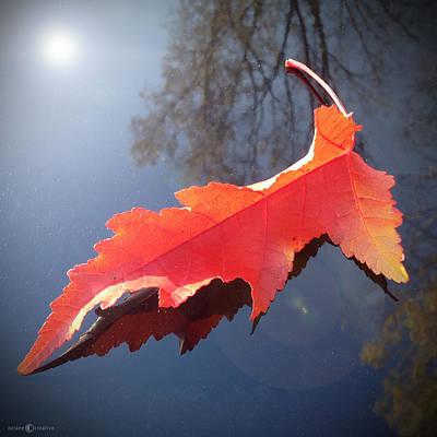 Photograph - Fall Leaf On Car Hood by Tim Nyberg