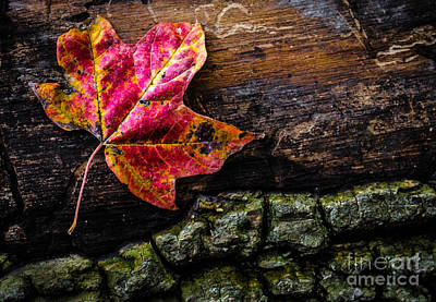 Photograph - Fall Leaf On Fallen Tree by Michael Arend