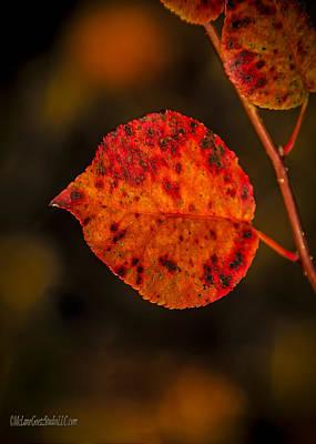 Fire Photograph - Fall Leaf On Fire by LeeAnn McLaneGoetz McLaneGoetzStudioLLCcom