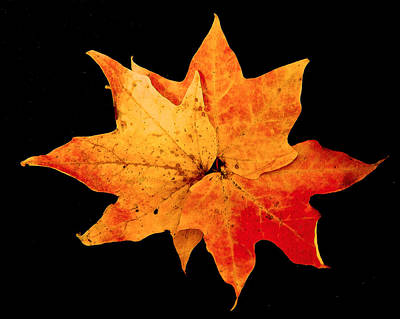 Art Print featuring the photograph Fall Leaf Trio by Dee Dee  Whittle