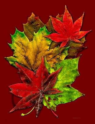 Red Photograph - Fall Leafs Art by Mario Perez