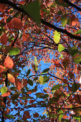 Photograph - Fall Leaves Against The Sky by Melinda Fawver
