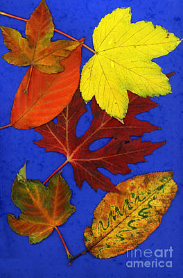 Photograph - Fall Leaves by AJ Photos
