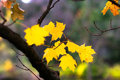 Photograph - Fall Leaves by Allan Millora