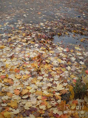 Fall Leaves And Puddle Art Print