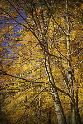 Hager Wall Art - Photograph - Fall Leaves And Trees In West Michigan No171 by Randall Nyhof