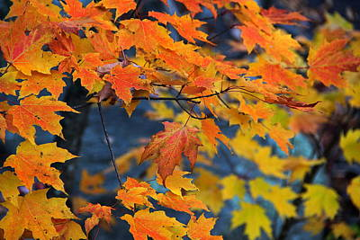 Photograph - Fall Leaves by Andrea Galiffi