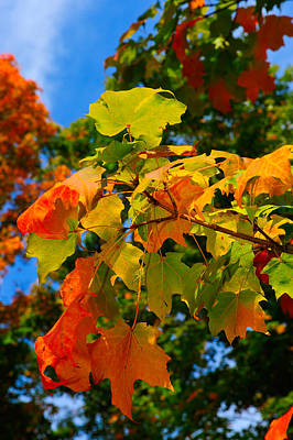 Photograph - Fall Leaves by Don and Bonnie Fink