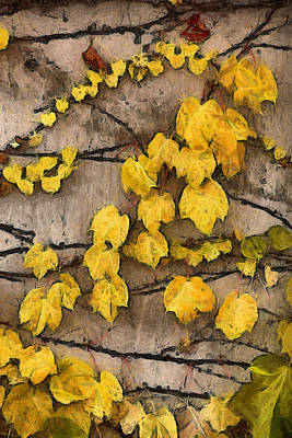 Photograph - Fall Leaves II by Brian Davis