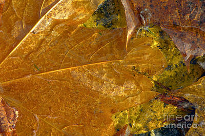 Photograph - Fall Leaves In Ice by Sharon Talson