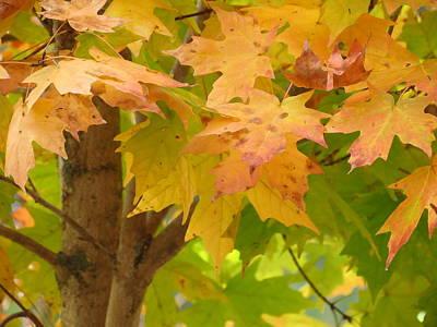 Photograph - Fall Leaves In North Carolina by Teresa Cox