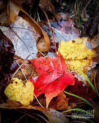Photograph - Fall Leaves In The Rain by David Perry Lawrence