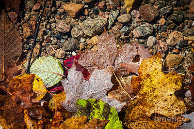 Photograph - Fall Leaves In Water by Elena Elisseeva