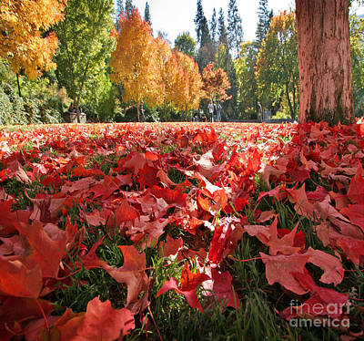 Photograph - Fall Leaves by J Christopher Briscoe