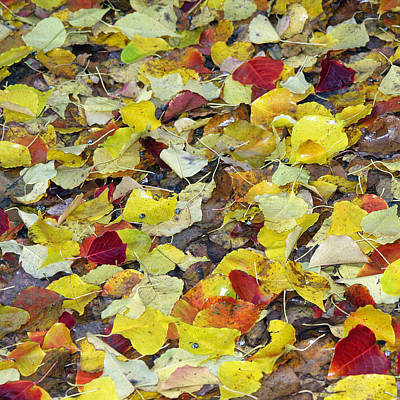 Photograph - Fall Leaves by Jennifer Muller