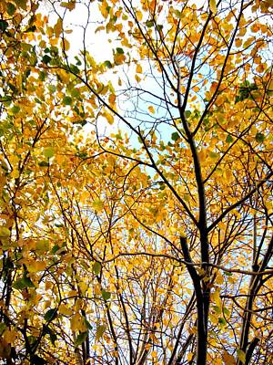 Photograph - Fall Leaves by Kruti Shah