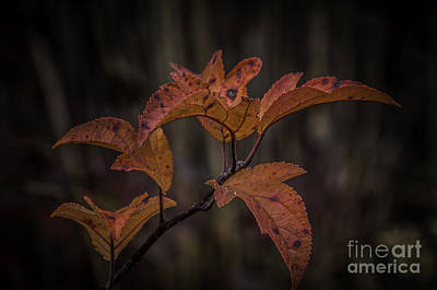 Photograph - Fall Leaves 2 by Ronald Grogan