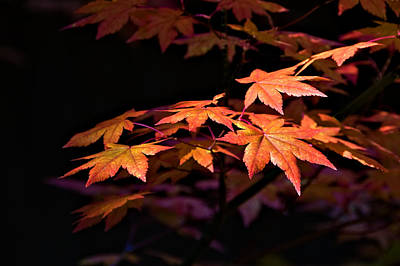 Photograph - Fall Leaves by Maria Coulson