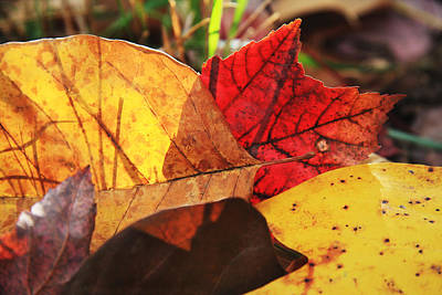 Photograph - Fall Leaves by Melinda Fawver