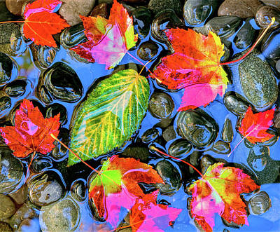 Fallen Leaf On Water Photograph - Fall Leaves On Black Rocks In Water by Panoramic Images