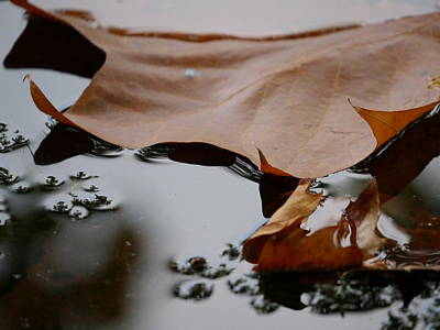 Photograph - Fall Leaves On Water by Jane Ford