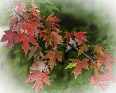 Photograph - Fall Leaves by Ronald Grogan