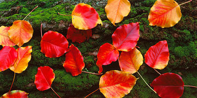 Forest Floor Photograph - Fall Leaves Sacramento Ca Usa by Panoramic Images
