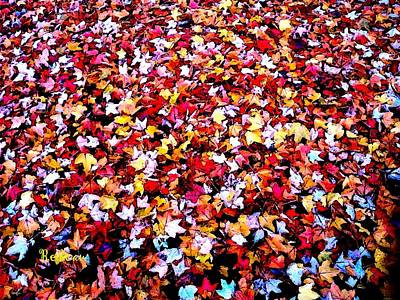 Photograph - Fall Leaves by Sadie Reneau