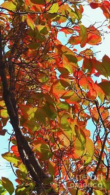 Fall Leaves Art Print by Scott Cameron