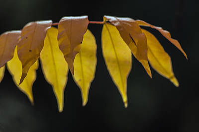 Photograph - Fall Leaves by Tam Ryan