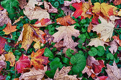 Photograph - Fall Leaves by Thomas Hall