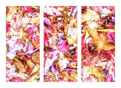 Photograph - Fall Leaves Triptych by Alice Gipson