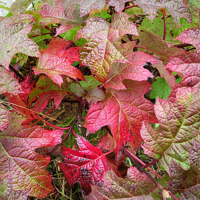 Photograph - Fall Leaves Upclose by Duane McCullough