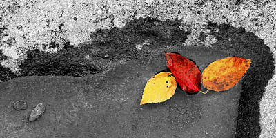 Art Print featuring the photograph Fall Leaves by Wendell Thompson