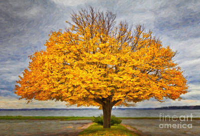 Fall Linden Art Print by Verena Matthew